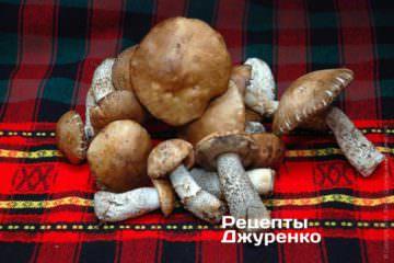 Свежие лесные грибы
