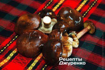 польські гриби