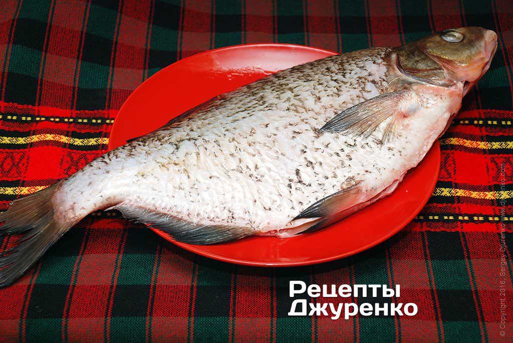 толстолобик морская рыба